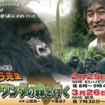 ゴリラ先生 ルワンダの森を行くの詳細ページへ