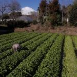 ニッポンの里山 ふるさとの絶景に出会う旅「清流魚がすむ冬の畑 静岡県 御殿場市」の詳細ページへ