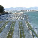 ニッポンの里山 ふるさとの絶景に出会う旅 「漁師が育む魚たちのゆりかご」の詳細ページへ
