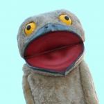 """ダーウィンが来た!生きもの新伝説 謎の""""変顔鳥""""タチヨタカの詳細ページへ"""
