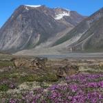 体感!グレートネイチャー「奇峰の大渓谷 一瞬の花園~カナダ北極圏の夏~」の詳細ページへ