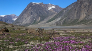 体感!グレートネイチャー「地球最古の大地に奇跡の花園~北極圏バフィン島の夏~」の詳細ページへ