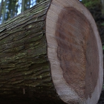ニッポンの里山 ふるさとの絶景に出会う旅「月の暦で育てる杉の森」 ~静岡県浜松市~の詳細ページへ