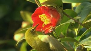 ニッポンの里山 ふるさとの絶景に出会う旅 「野鳥が集まる丸い畑 ~長崎県五島市~」の詳細ページへ