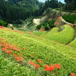 特集ニッポンの里山 火の国 木の里 水の園 豊穣の九州を行くの詳細ページへ