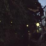 ニッポンの里山 ふるさとの絶景に出会う旅 「満天星とホタルの里 ~宮崎県 小林市~」の詳細ページへ
