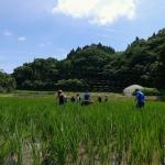 ニッポンの里山 ふるさとの絶景に出会う旅 「コイと湧き水が育てる田んぼ ~熊本県 産山村~」の詳細ページへ