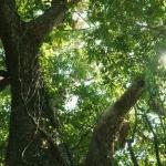 ニッポンの里山 ふるさとの絶景に出会う旅 「アオスジアゲハ舞う防風林~鹿児島県 屋久島~」の詳細ページへ