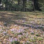 さわやか自然百景「東京 井の頭公園」の詳細ページへ
