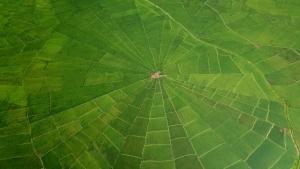 """アーススキャナー~宙(そら)からわかる""""奇景""""の謎~「大地に描かれたクモの巣模様」(再放送)の詳細ページへ"""