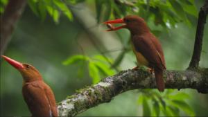 さわやか自然百景「高知 四万十川の森」の詳細ページへ