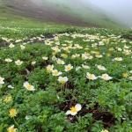 にっぽんトレッキング100「夏のフラワートレッキング 白馬岳&秋田駒ケ岳」の詳細ページへ
