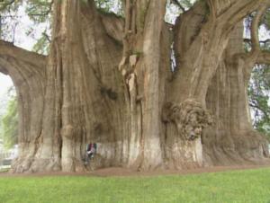 地球に好奇心 北米大陸 世界一の木を求めて(再放送)の詳細ページへ
