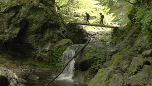 吉田類のにっぽん百低山「東京 川苔山」の詳細ページへ